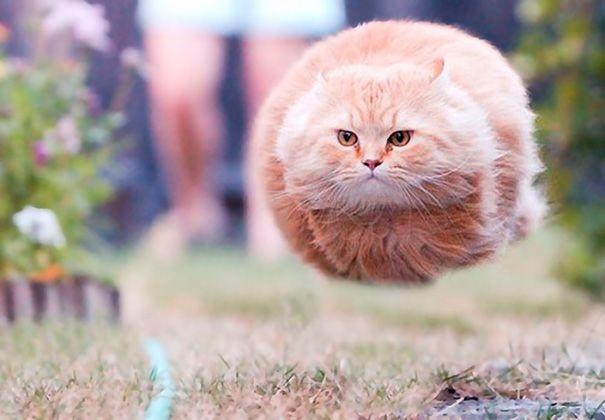 Замурррчательные коты, сфотографированные в самый подходящий момент