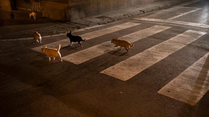 Стая собак на одной из улиц в Барселоне, Испания, 24 марта 2020 года
