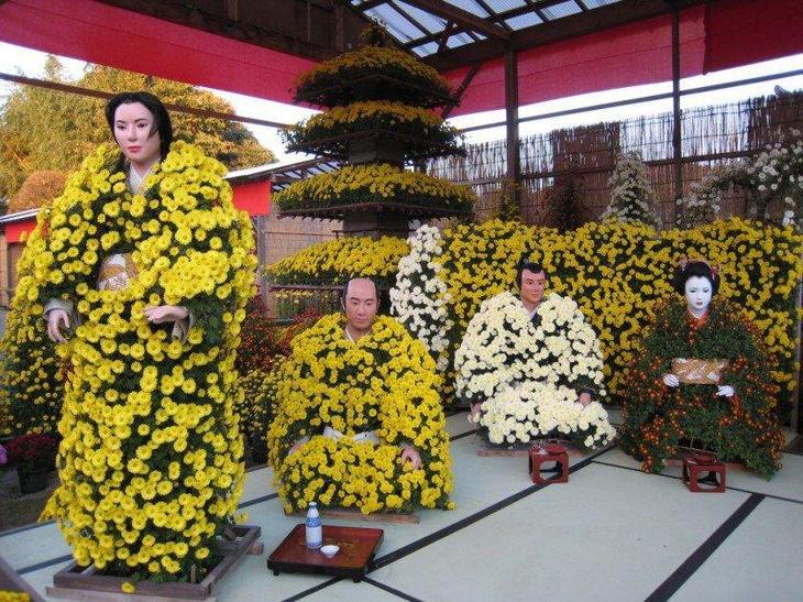 Цветок японии хризантема