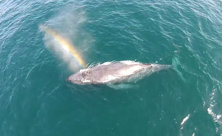 fotografii kitov 27