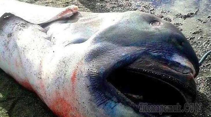 10 таинственных существ, выброшенных океаном