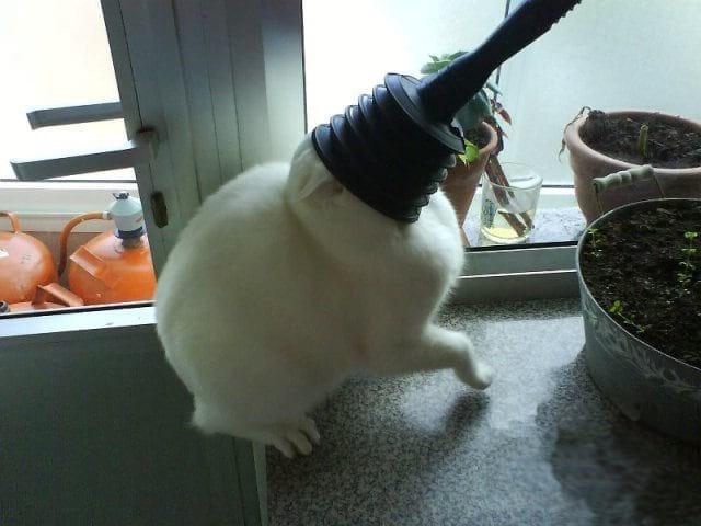 20 смешных котов, встретивших худший день в своей жизни