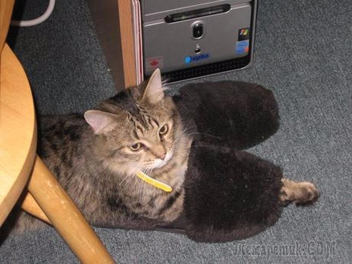 У кота замерзли лапки