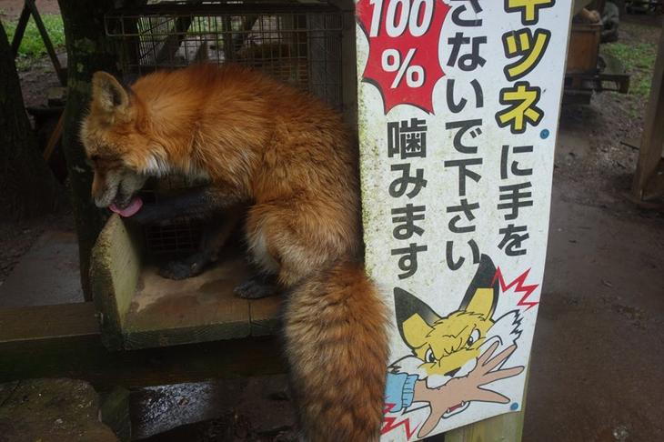 Вход в деревню лисиц в Японии, фото