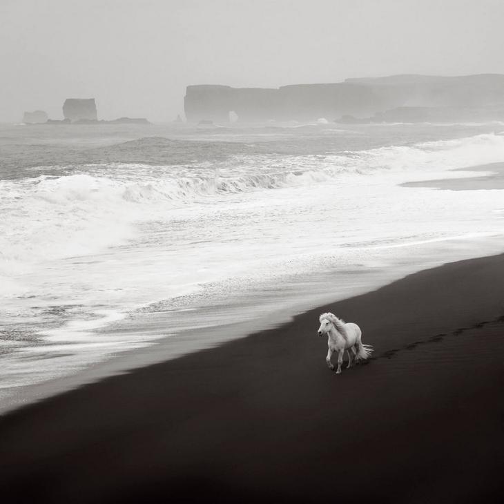 loshadi-Islandii-fotograf-Dryu-Doggett 21