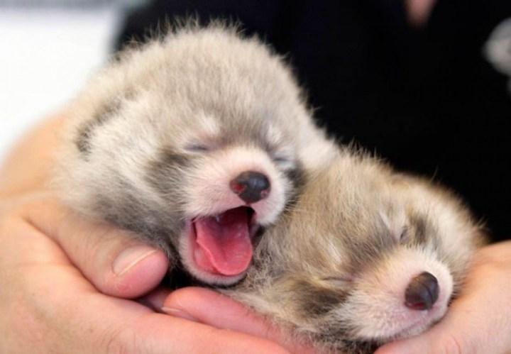 15 крошечных животных, которые помещаются на ладошке
