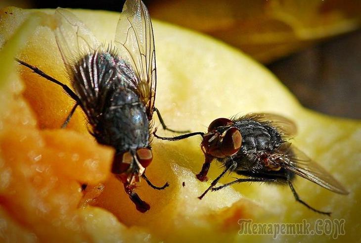 Откуда берутся мухи в квартире зимой