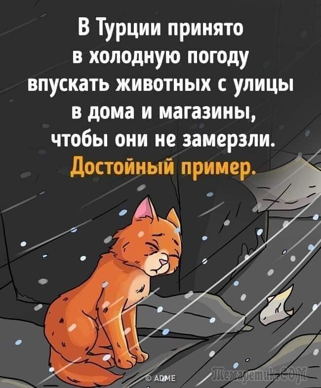 Кошка (Стих)