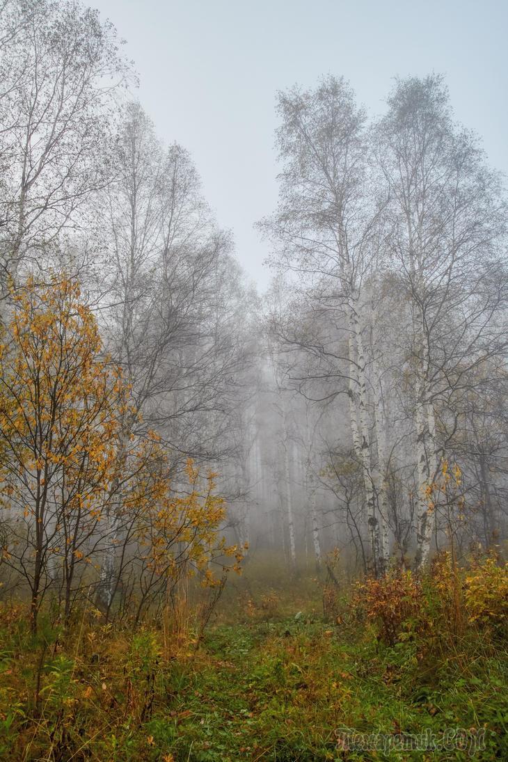 Прогулки по лесу с фотоаппаратом. Туман