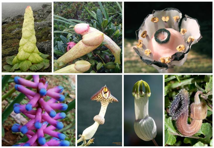 Вы реально поразитесь и удивитесь, глядя на эти сумасшедшие  цветы и растения мира красота, особенные, природа, растения, флора, цветы