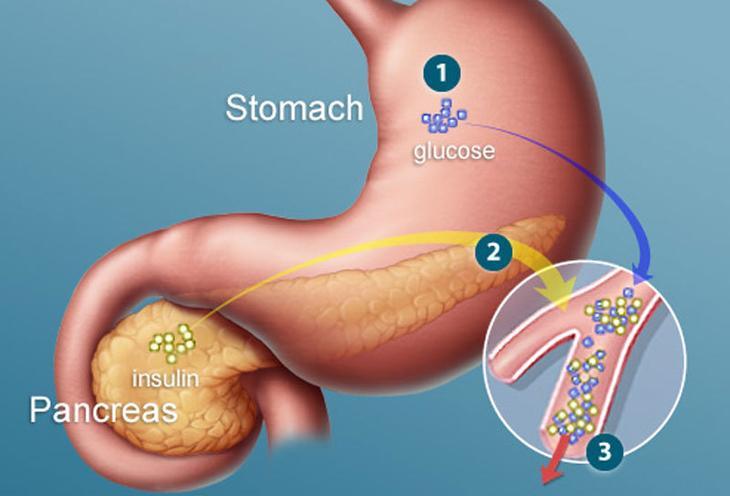 Диета и эндокринная система организма