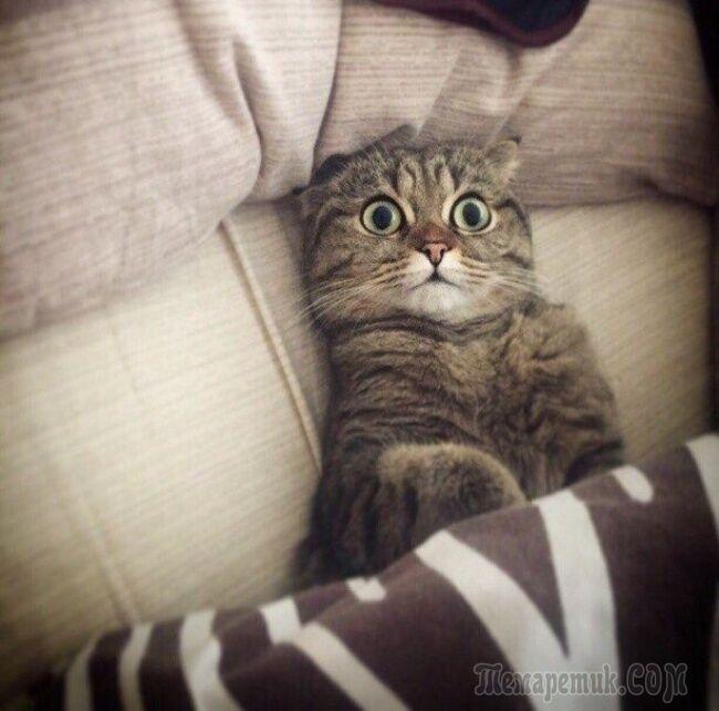 Несколько фотографий, в которых вся суть котов