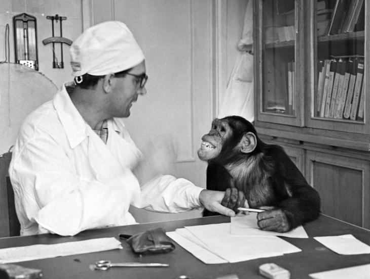 Эксперимент доктора Иванова о создании гибридов обезьяны и человека удался? истории, мистика, наука, тайны, эксперименты