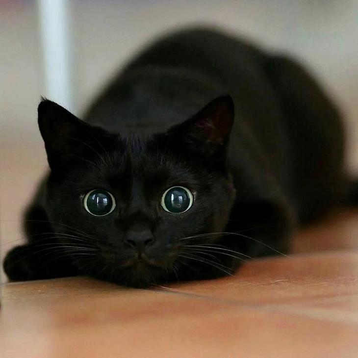 20 людей, которые плевать хотели на суеверия, завели себе чёрного котейку и не пожалели