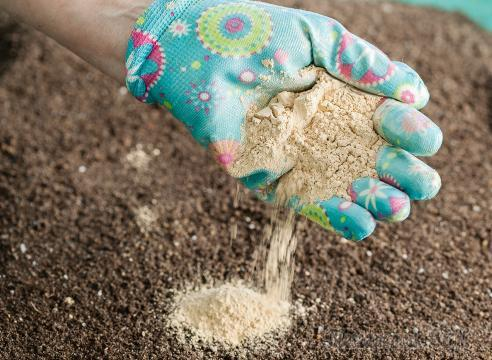 Чем обработать почву, чтобы избавиться от проволочника