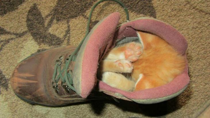 Фотографии животных, которые спят там, где захотят 4
