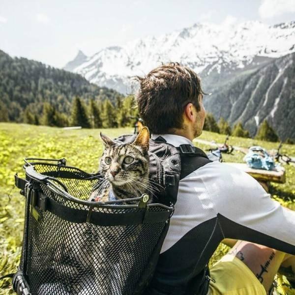 Кошка Катод, которая обожает путешествовать со своим хозяином