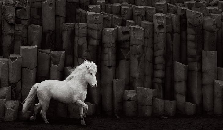 loshadi-Islandii-fotograf-Dryu-Doggett 5