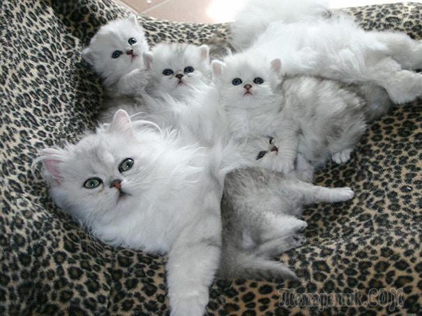 20 мамочек-кошек, которые явно гордятся своими котятами