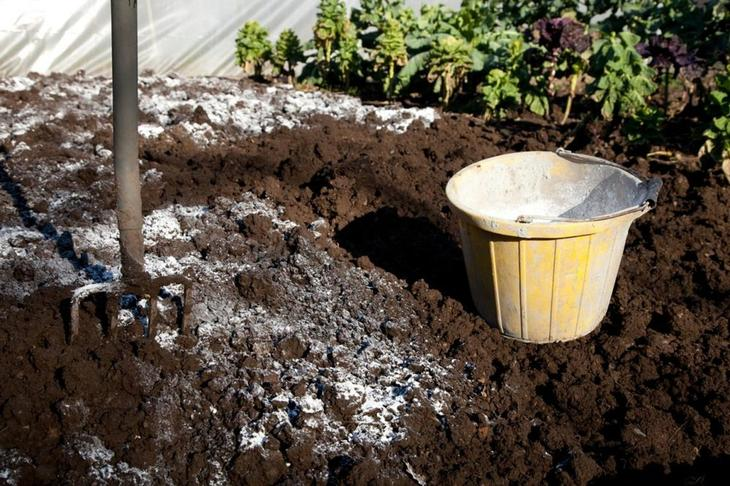 Чем можно произвестковать почву