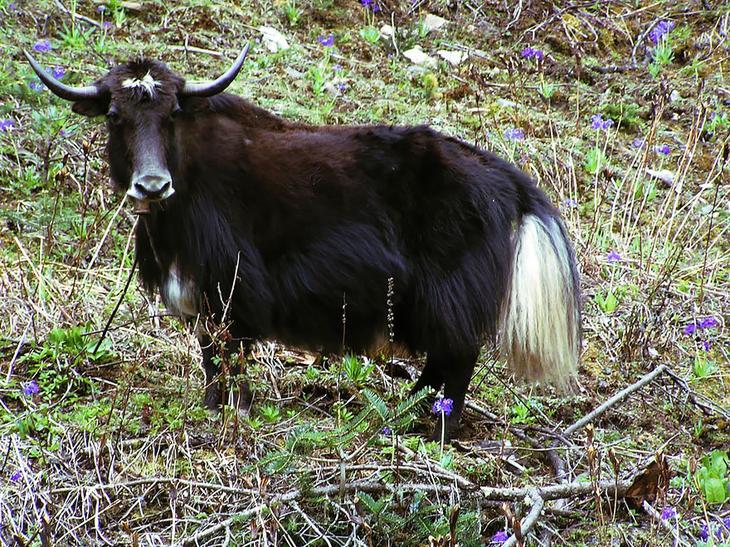18 гибридных животных, в существование которых трудно поверить-13
