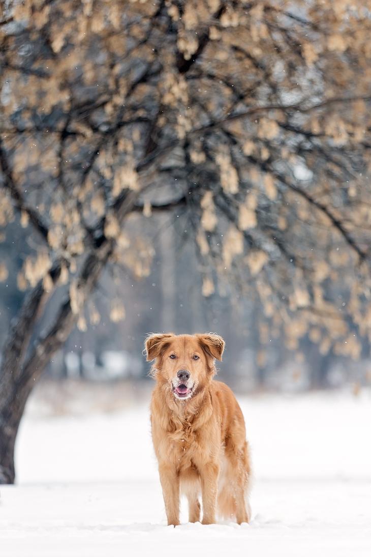 Фотографии собак - 6