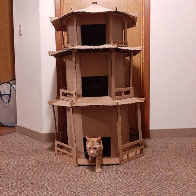 Кошачьи картонные замки и крепости