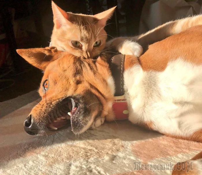 20 кошек, которые вели себя как пушистые негодники и пёсики им в этом ничуть не уступали