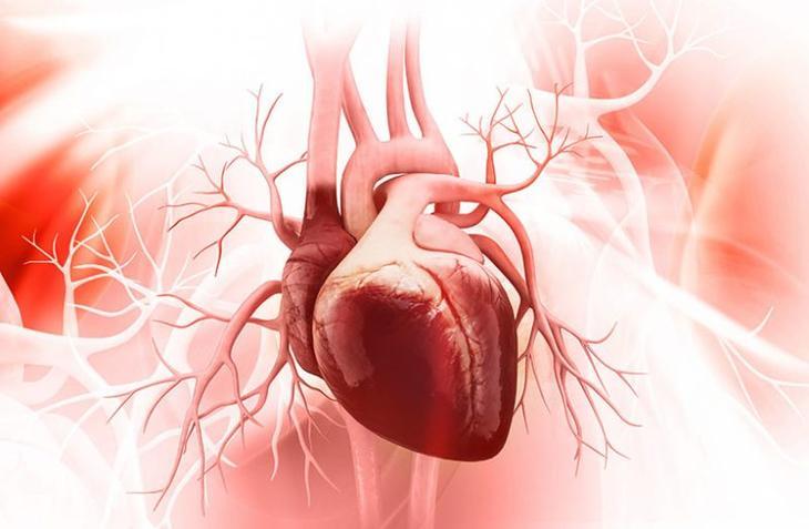 Важный минерал для вашего сердца
