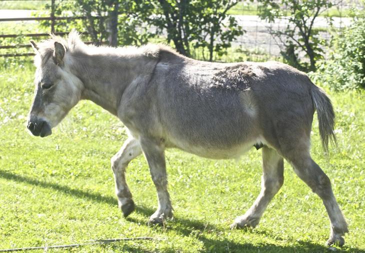 Лошак — гибрид лошади и осла. (Just chaos)