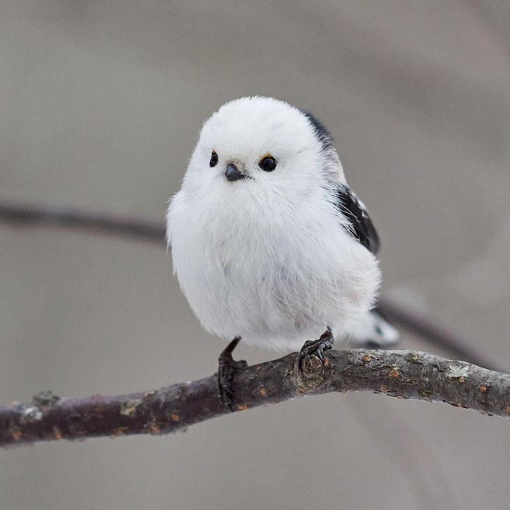Потрясающие птицы: фоторепортаж