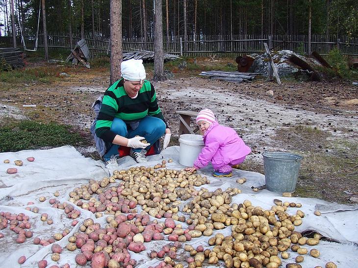 Высыпаем картофель на пленку