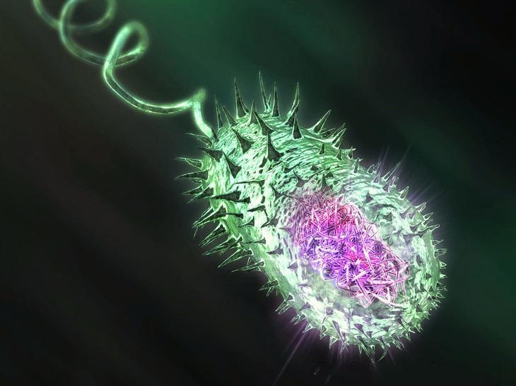 От бактерий - царства рушились. 10 самых опасных из них с фотографиями. - фото 1