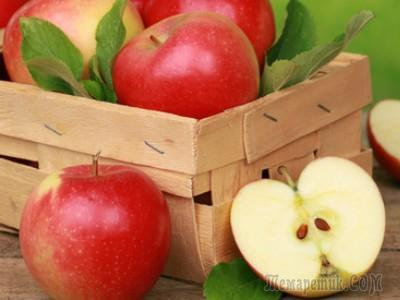 Как сохранить яблоки семеренко на зиму