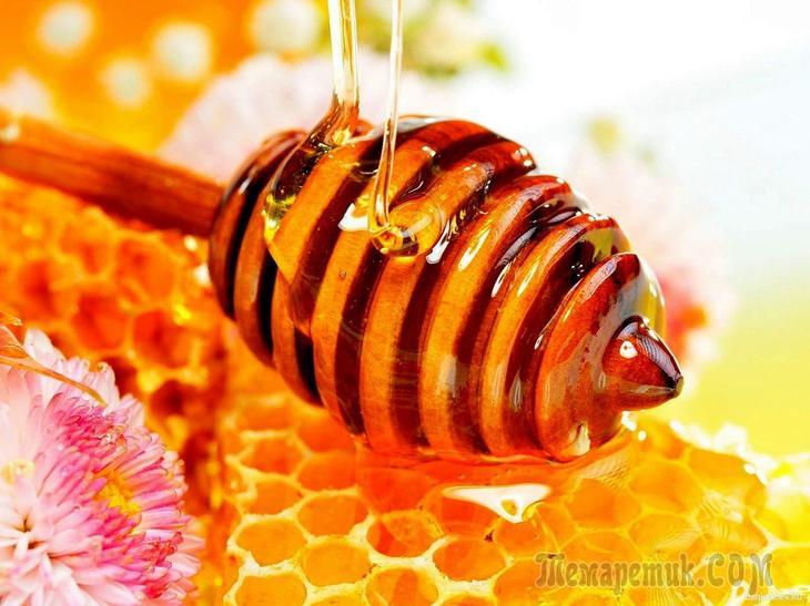 Мед свойства и влияние на организм