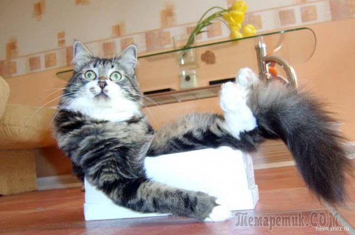 Анекдоты, шутки и байки о котах
