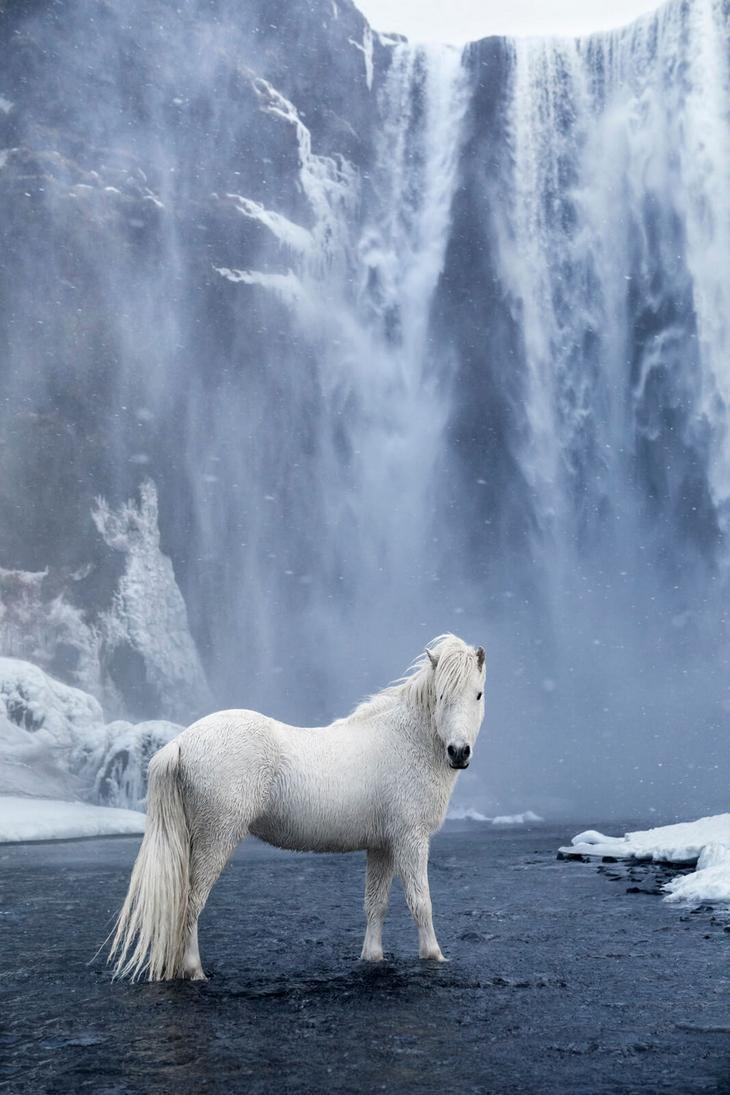 loshadi-Islandii-fotograf-Dryu-Doggett 10