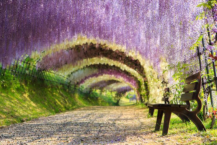 7 самых красивых тоннелей из деревьев в мире