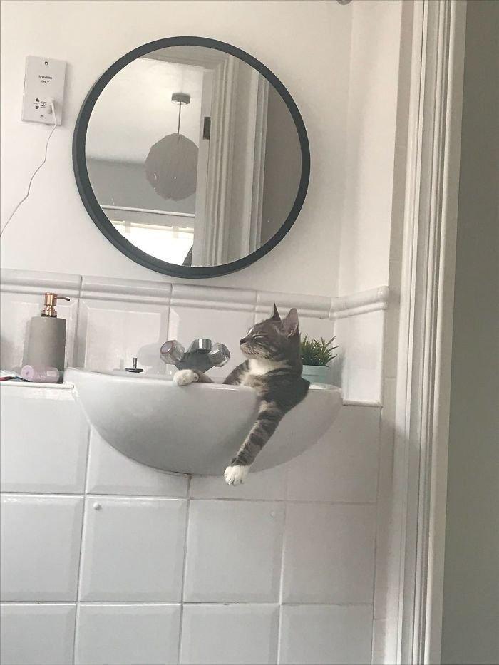 Несколько котов, которые считают себя хозяевами в доме