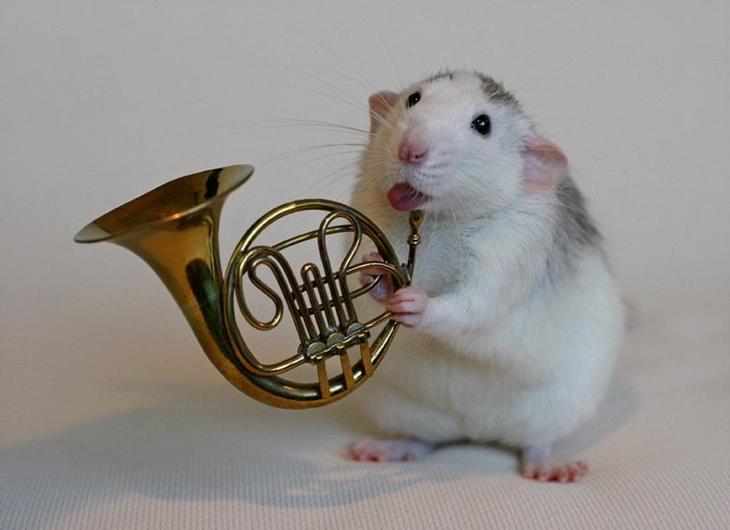 Крыса играет на валторне. Эллен ван Дилен. Фото