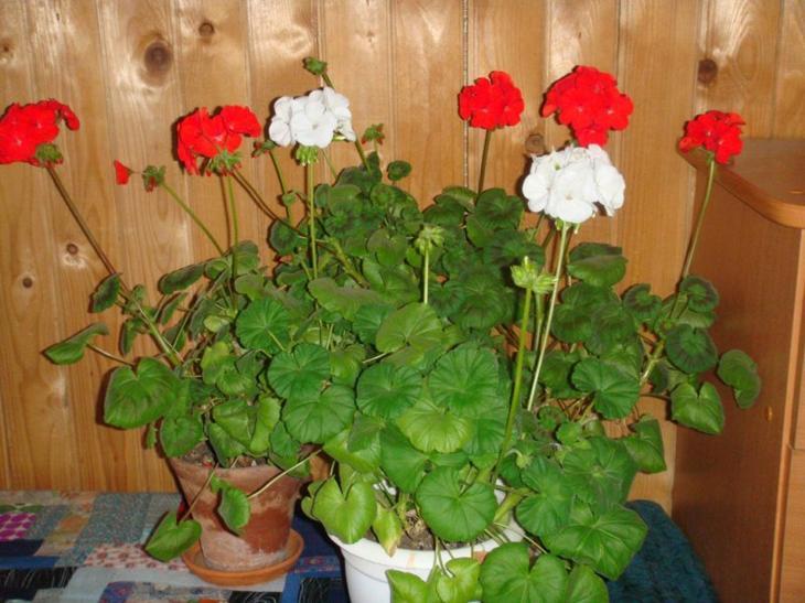 Растения которые должны быть в каждом доме