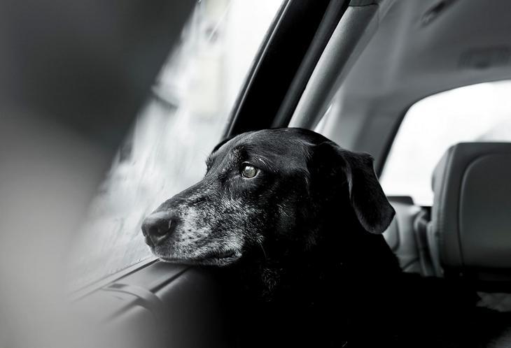 Победители фотоконкурса Dog Photographer of the Year 2018 14