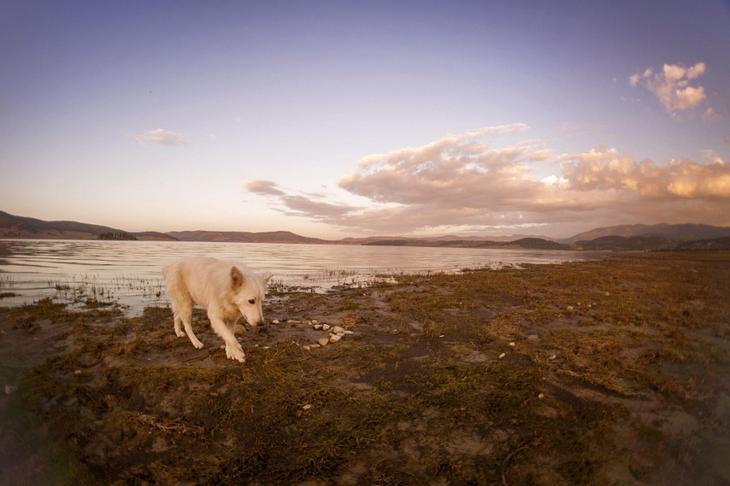 Фотографии собак - 15