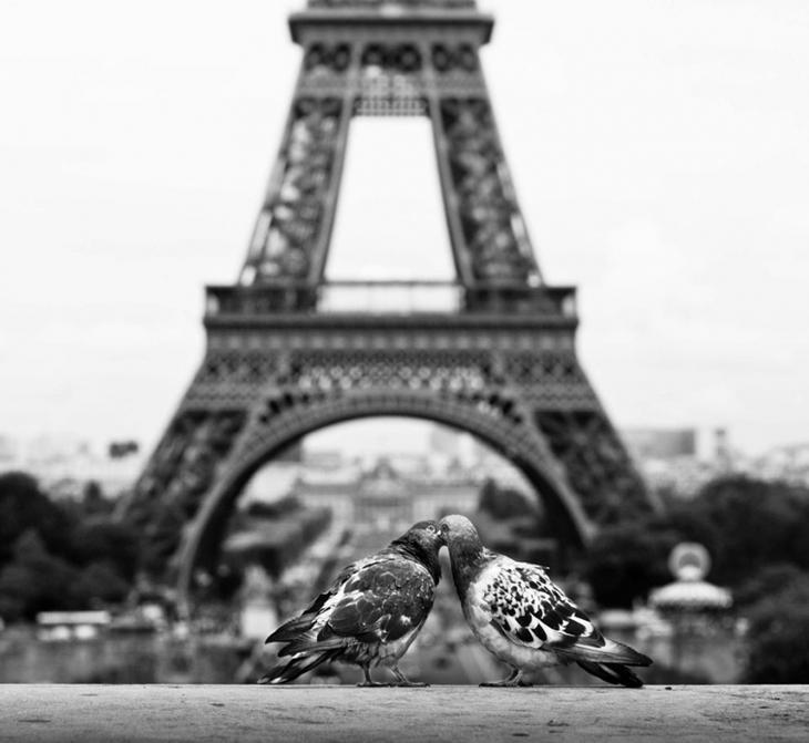 поцелуи животных, очаровательные фото животных, животные целуются