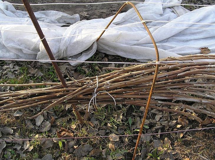 Подготовка малины к укрытию
