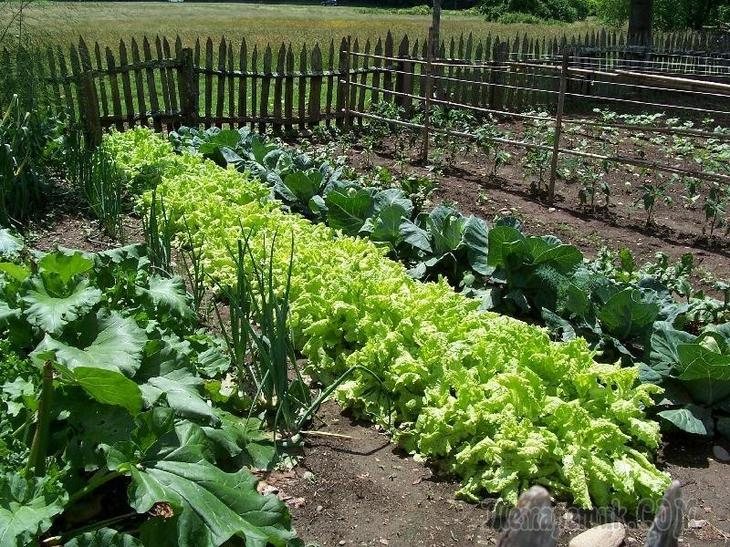 organic gardening By dianne venetta for galtimecom organic gardening is the method of gardening that utilizes only ma.