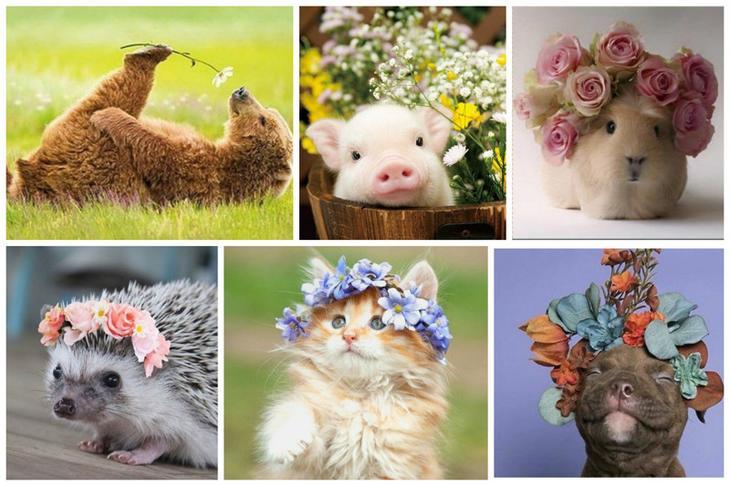 Пост милоты и красоты в честь праздничка животные, милота, мимими, цветы