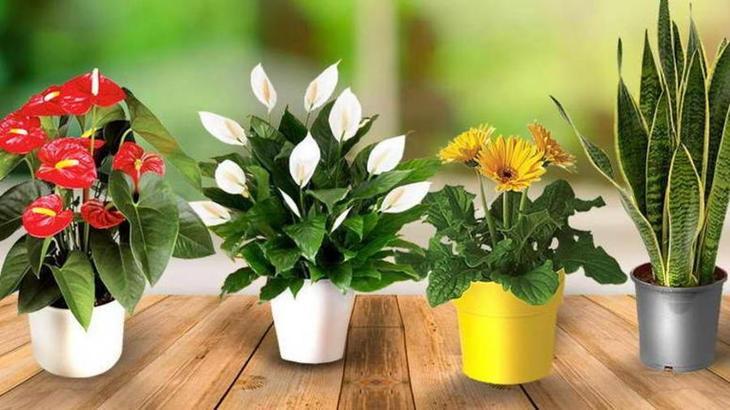 Чем подкормить комнатные цветы в домашних условиях: народные средства