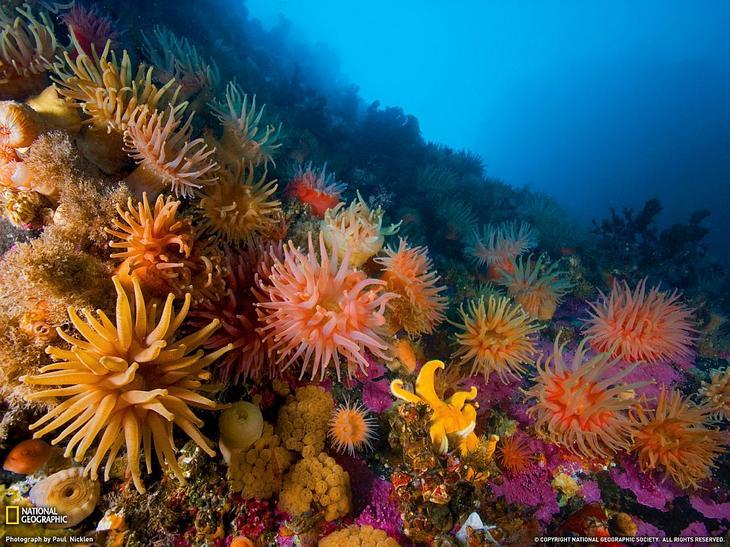 Анемоны и мягкие кораллы