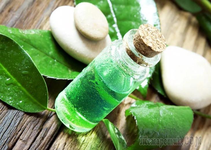 Эфирное масло чайного дерева: состав и лечебные свойства, cпособы применения и лечение эфирным маслом чайного дерева